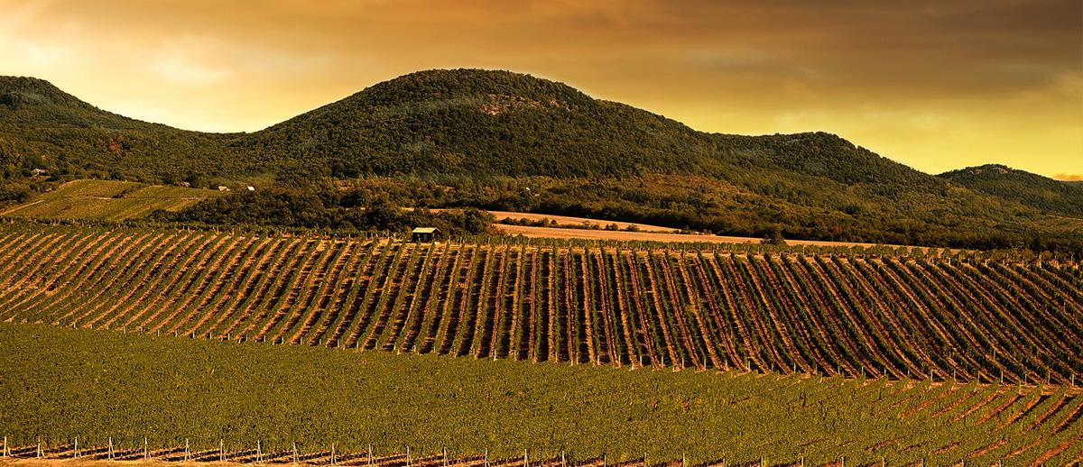 Vinohrady Širákov